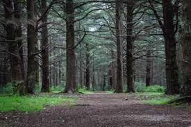calme et bien être Yoga en Forêt